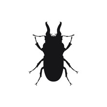 Illustration With Insect Big B...