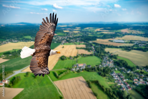 Adler fliegt in großer Höhe mit ausgebreiteten Flügeln an einem sonnigen Tag im Mittelgebirge Canvas Print