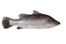 Fresh Sea Bass Fish (raw) Isol...