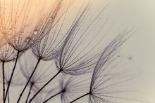 Abstract Macro Photo Of Dandel...