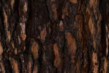 Embossed Texture Of Brown Tree...