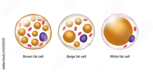 Canvas Print Vector set of brown, beige and white fat cells