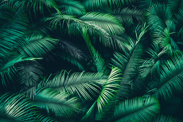 Fototapeta Do pokoju tropical forest natural background, nature scene in green tone style