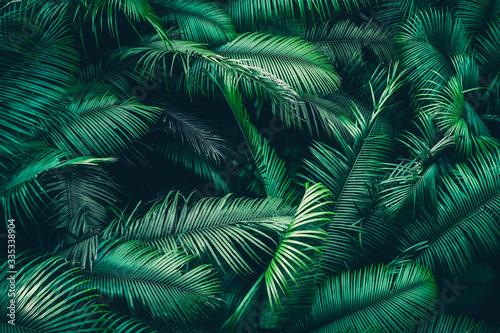 Naklejka premium naturalne tło lasów tropikalnych, scena natury w stylu zielonego tonu