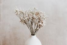 White Wild Dried Flower In White Ceramic Vase Closeup On Grey Background