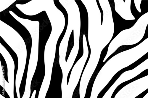 Black and white zebra stripes background. Zebra skin. Zebra background.Vector illustration. - 335354771