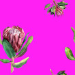 canvas print picture - Seamless pattern. Protea watercolor flowers similar to an artichoke on a pink background