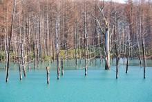 Blue Pond (aoi-ike) In Biei, H...