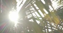 Sun Peeking Through Palms Of A...