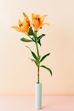 Still Life Of Orange Lily In Vase Against Peach Background
