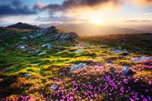 Gorgeous Landscape With Charmi...