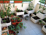 Quarantine things to do. Growing vegetables on balcony.