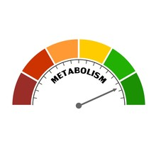 Metabolism Level Scale With Ar...