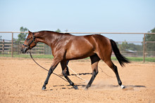 Horse On Longe Line
