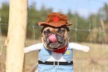 Funny French Bulldog Dog Licki...