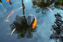 Zen Pond Background