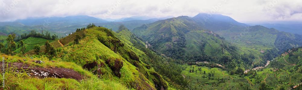 Fototapeta Panoramic view of tea plantations. Munnar, Kerala, India