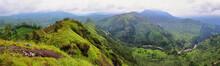 Panoramic View Of Tea Plantati...