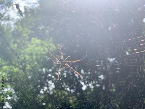 Araignée tissant sa toile aux chutes d'Iguazu Canvas Print