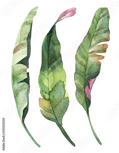 Fototapeta Watercolor set of green tropical leaves isolate in white background. obraz na płótnie