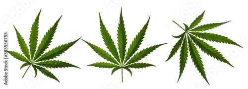 Marijuana leaf sativa isolated on white without shadow Wallpaper Mural