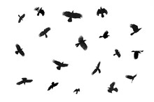 The Crow Is Flying Separately...