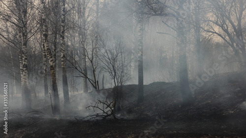 Forest fire consequences - smoke and charred birch tree trunks on the scorched earth
