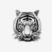 Tiger Face Drawing Vector Illustration Animal Badge Bengal