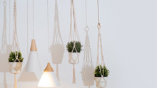 Pots With Home Plants Hang In The Interior, Light Scandinavian Interior Design.