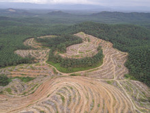 Aerial View Oil Palm Clearing At Hillside At Kedah.
