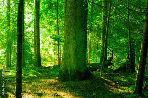 Photo green forest in the sunlight