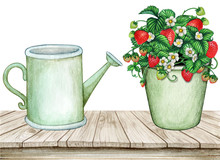 Watercolor Vintage Wooden Table With Water Can And Strawberry Pot