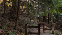 Wooden Steps On Forest Trail N...