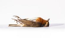 Dead Bird With Feet Up Isolate...