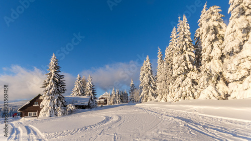 Obraz Pięknie ośnieżone choinki na tle błękitnego nieba, Pec pod Śnieżką, Czechy - fototapety do salonu