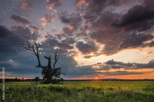 Zachód słońca na łęgach w Rogalinie