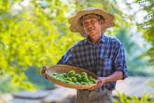 Asian Man Senior Farmer With L...