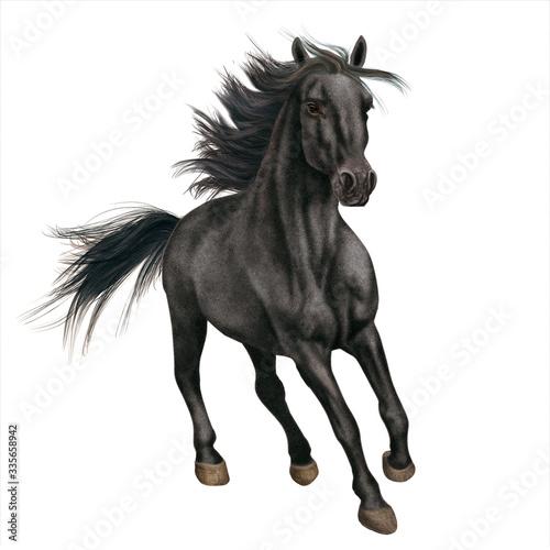 cheval, noir, étalon, animal, isolé, blanc, galop, courir, course, nature, mammi Canvas Print