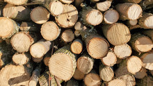 Stack Of Firewood, Tree Branches Cut And Stacked Neatly, End Grain Of Wood
