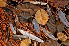 Leaf Litter Abstract.  Fallen ...
