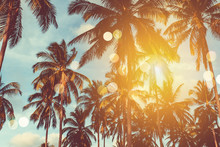 Tropical Palm Coconut Trees On...