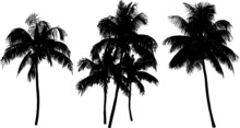 Coconut Palm Tree Silhouette Isolated On White
