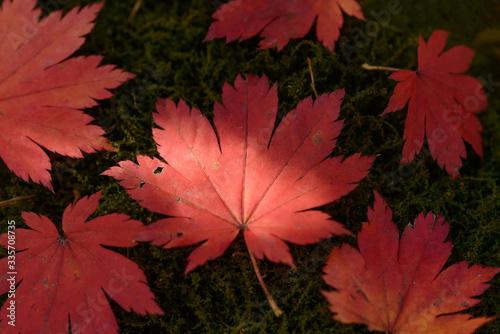 Fallen autumn leaf Canvas Print