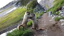 Mount Rainier National Park, M...