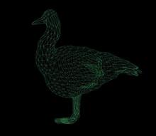 Wireframe Polygonal Duck