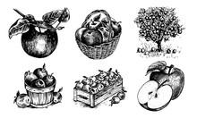Apples In A Basket, Apples In ...