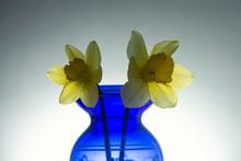 Two Daffodils Still Life