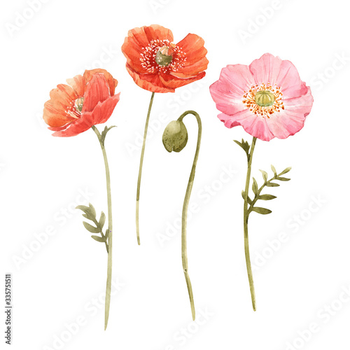 Beautiful watercolor floral set with red and pink poppy flowers. Stock illustration. - 335751511