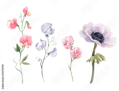 Beautiful watercolor floral set with anemone and sweet pea flowers Fototapeta