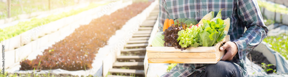 Fototapeta Young asian man harvest and picking up fresh organic vegetable kitchen garden in basket in the hydroponic farm, agriculture for healthy food and business concept, banner website.